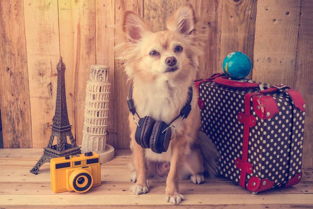 La mejor manera para viajar con animales